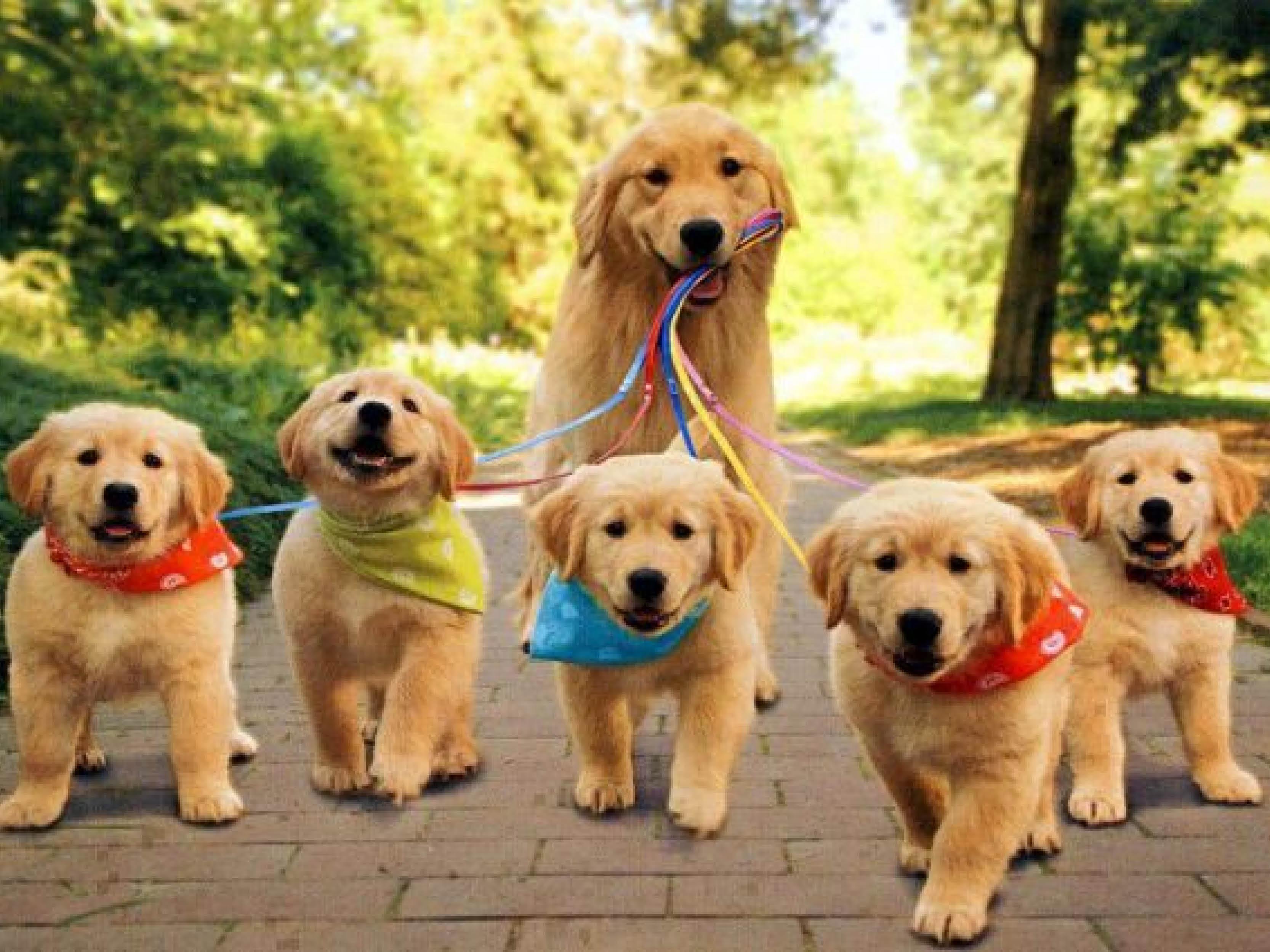 http://assets.boxdice.com.au/laguna/attachments/8f9/0ca/dogs.jpg?fb00c42d8d25800d029353bc9559d76b
