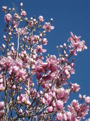 http://assets.boxdice.com.au/oz-combined-realty/attachments/85b/712/rsz_1rsz_magnolia1.jpg?d02467f0719f715cbccd07a82d56f5c7