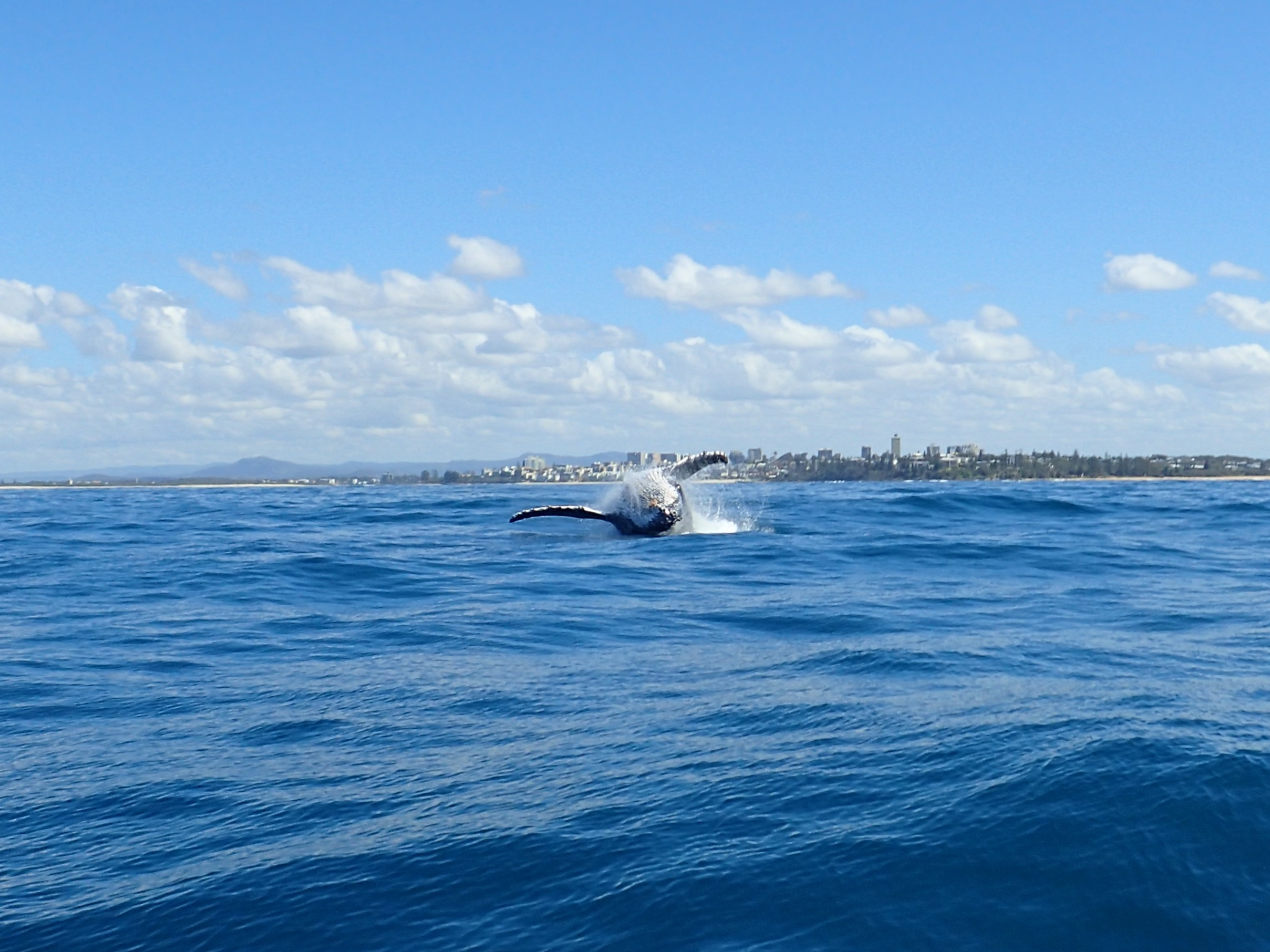https://assets.boxdice.com.au/screpartners/attachments/859/750/real_estate_caloundra_whale.jpg?df94ad3c4bbab0e9090e7fb075680fa0